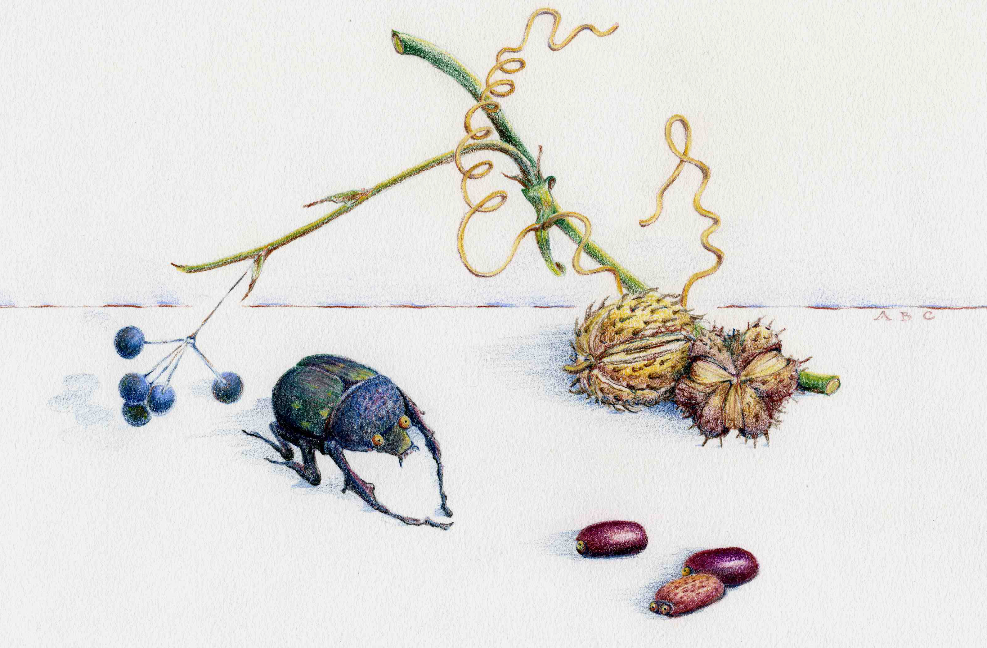 Illustration Beetle Bean Battle