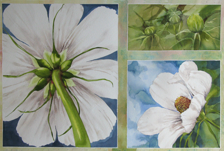 Painting Three Views of a Cosmos flower