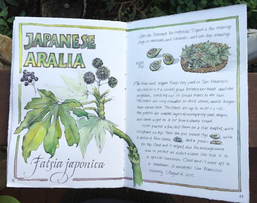 Illustration Fatsia japonica journal