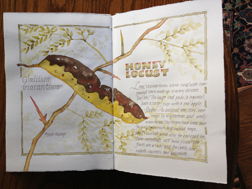 Illustration Honey Locus journal